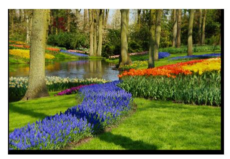 Flower Master Garden Planning Software